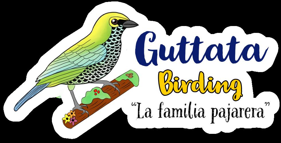 Guttata Birding